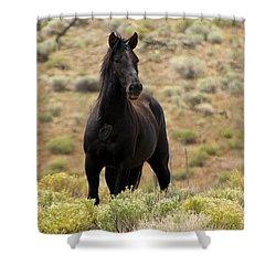 Wild Black Mustang Stallion Shower Curtain