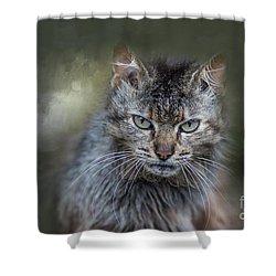 Wild Cat Portrait Shower Curtain