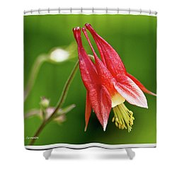 Wild Columbine Flower Shower Curtain