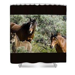 Wild Mustang Herd Shower Curtain
