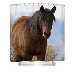 Wild Mustang Horse Shower Curtain