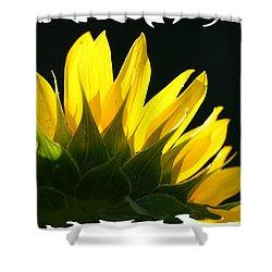 Shower Curtain featuring the photograph Wild Sunflower by Shari Jardina