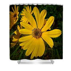 Wild Yellow Shower Curtain