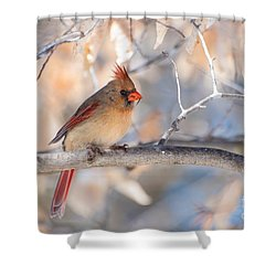 Winter Cardinal Shower Curtain by Debbie Green