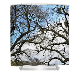Shower Curtain featuring the photograph Winter Trees At Fort Tejon Lebec California  by Floyd Snyder