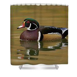 Wood Duck Shower Curtain by Doug Herr