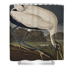 Wood Ibis Shower Curtain