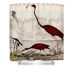 Wood Ibis, Scarlet Flamingo, White Ibis Shower Curtain