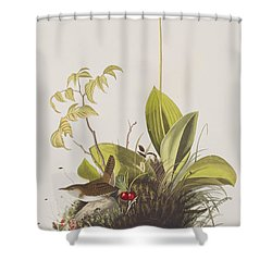 Wood Wren Shower Curtain