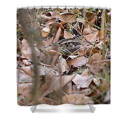 Woodcock Shower Curtain by Chip Laughton