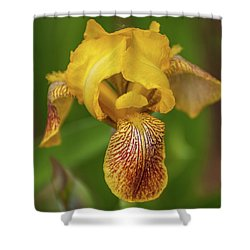 Shower Curtain featuring the photograph Yellow Bearded Iris by Brenda Jacobs