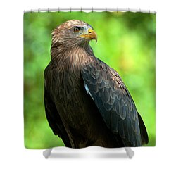 Yellow-billed Kite Shower Curtain