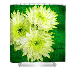 Yellow Chrysanthemums On A Green Background. Shower Curtain by Paul Cullen