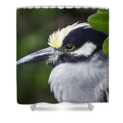 Yellow-crowned Night Heron Shower Curtain