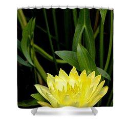 Yellow Lotus Shower Curtain by Debra     Vatalaro
