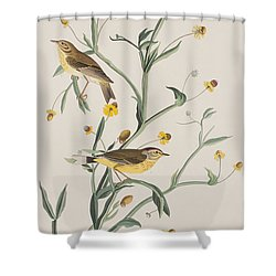 Yellow Red-poll Warbler Shower Curtain