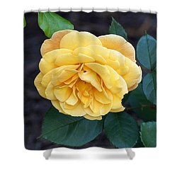 Shower Curtain featuring the painting Yellow Rose by Debra Crank