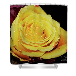 Shower Curtain featuring the photograph Yellow Rose by Elvira Ladocki