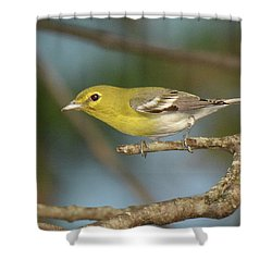 Yellow-throated Vireo Shower Curtain