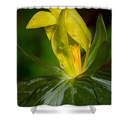 Yellow Trillium Shower Curtain
