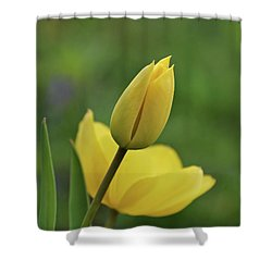 Shower Curtain featuring the photograph Yellow Tulips by Sandy Keeton