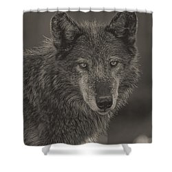 Zaltana  Shower Curtain