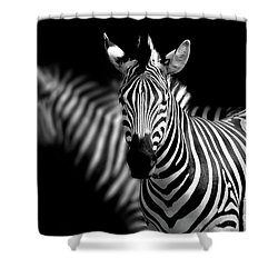 Shower Curtain featuring the photograph Zebra by Charuhas Images