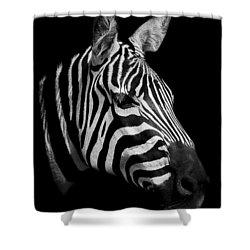 Zebra Shower Curtain by Paul Neville