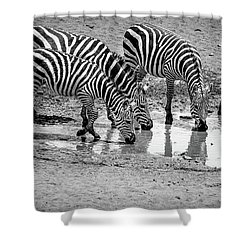 Shower Curtain featuring the photograph Zebras At The Watering Hole by Marion McCristall