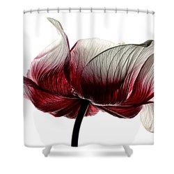 Anemone Shower Curtain by Mark Johnson