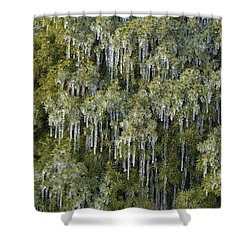 Shower Curtain featuring the photograph 1000 Icicles And A Bush by JD Grimes