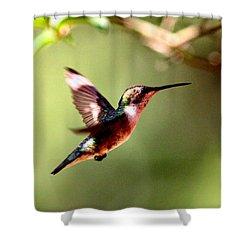 103456 - Ruby-throated Hummingbird Shower Curtain