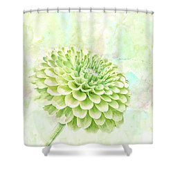 10891 Green Chrysanthemum Shower Curtain by Pamela Williams