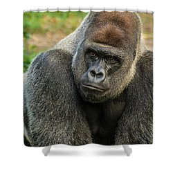 10898 Gorilla Shower Curtain by Pamela Williams