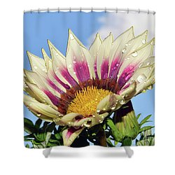 Nice Gazania Shower Curtain by Elvira Ladocki