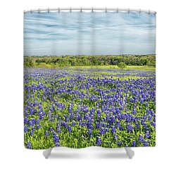 Texas Bluebonnets 11 Shower Curtain
