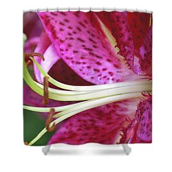 Untitled Shower Curtain by Paul Drewry