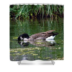 111415 City Park Goose Shower Curtain