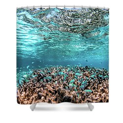 Underwater Coral Reef And Fish In Indian Ocean, Maldives. Shower Curtain