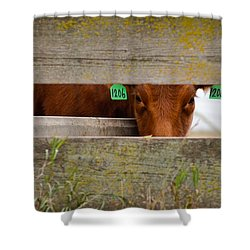 1206 Shower Curtain
