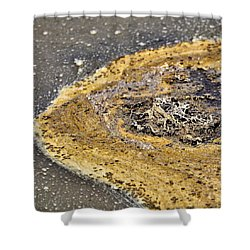 Shower Curtain featuring the photograph Primordial Soup by Bob Wall
