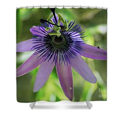 Purple Passiflora Shower Curtain by Elvira Ladocki