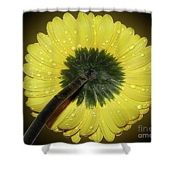 Shower Curtain featuring the photograph Yellow Gerber by Elvira Ladocki