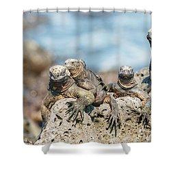 Shower Curtain featuring the photograph Marine Iguana On Galapagos Islands by Marek Poplawski