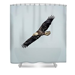 Shower Curtain featuring the photograph Bald Eagle by Peter Lakomy