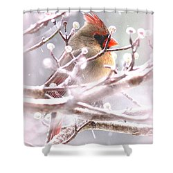 1554-003 Cardinal Shower Curtain