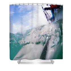 Tagging A Sandbar Shark Carcharhinus Plumbeus Shower Curtain