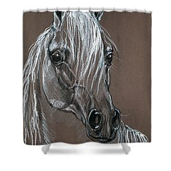 Arabian Horse  Shower Curtain by Angel  Tarantella