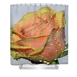 Shower Curtain featuring the photograph Rose by Elvira Ladocki