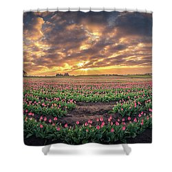 Shower Curtain featuring the photograph 180 Degree View Of Sunrise Over Tulip Field by William Lee